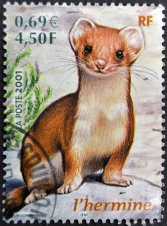 stoat: FRANCE - CIRCA 2001: A stamp printed in France shows an ermine, circa 2001