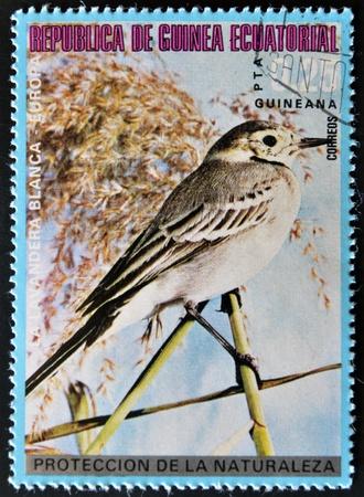 equatorial guinea: EQUATORIAL GUINEA - CIRCA 1979: A stamp printed in Equatorial Guinea shows a white Wagtail, circa 1979