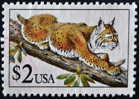 UNITED STATES OF AMERICA - CIRCA 1990: A stamp printed in USA shows bobcat in tree, circa 1990 photo