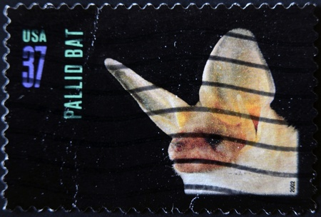 echolocation: UNITED STATES OF AMERICA - CIRCA 2002: A stamp printed in USA shows pallid bat, circa 2002