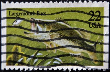 largemouth bass: ESTADOS UNIDOS DE AM�RICA - CIRCA 1990: Un sello impreso en los EE.UU. muestra una lobina negra, alrededor de 1990