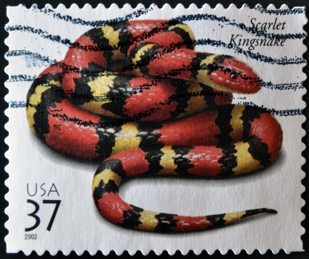 UNITED STATES OF AMERICA - CIRCA 2003: A stamp printed in USA shows a scarlet kingsnake, circa 2003 Stock Photo - 11878824