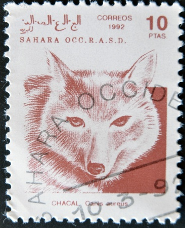 SAHARA - CIRCA 1992: A stamp printed in Sahrawi Arab Democratic Republic (SADR) shows Golden jackal, Canis aureus, circa 1992  Stock Photo