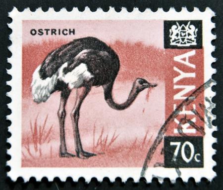 KENYA - CIRCA 1969: A stamp printed in Kenya shows an ostrich, circa 1969 photo