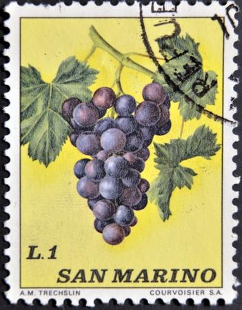 SAN MARINO - CIRCA 1973: A stamp printed in San Marino shows bunch of grapes, circa 1973 photo