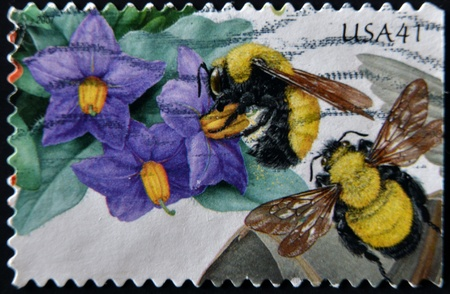 morrison: UNITED STATES - CIRCA 2007: stamp printed in USA shows Purple Nightshade and Morrison Bumblebee, circa 2007