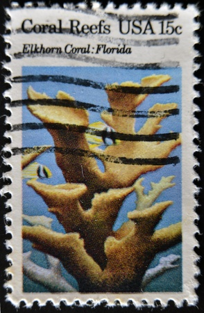 elkhorn coral: USA - CIRCA 1980 : A stamp printed in the USA shows Coral Reefs, Elkhorn coral, Florida, circa 1980