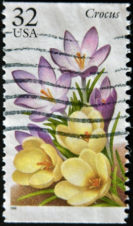 UNITED STATES OF AMERICA - CIRCA 1996: A stamp printed in USA shows a flower, crocus, circa 1996 Stock Photo - 12207219