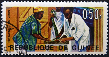 venom: GUINEA - CIRCA 1967: A stamp printed in Guinea shows Extraction of snake venom, circa 1967  Stock Photo