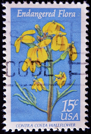 contra: UNITED STATES OF AMERICA - CIRCA 1979: a stamp printed in the United States of America shows contra costa wallflower, Endangered Flora, circa 1979