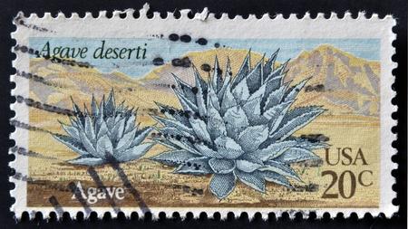 UNITED STATES - CIRCA 1981: A stamp printed in USA shows Agave deserti, circa 1981 Stock Photo - 12207508