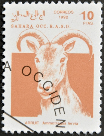 postman of the desert: SAHARA - CIRCA 1992: A stamp printed in Sahrawi Arab Democratic Republic (SADR), shows a Scimitar Arruit (ammotragus lervia), circa 1992