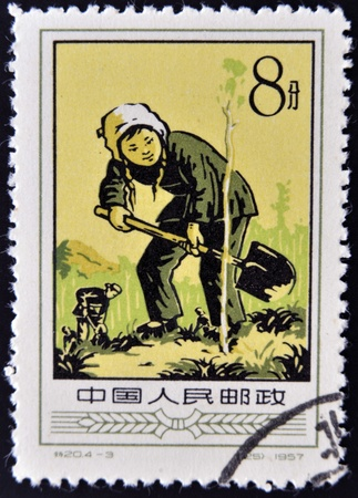 CHINA - CIRCA 1957: A Stamp printed in China shows image of a young plant tree, circa 1957