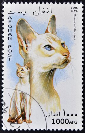 AFGHAN - CIRCA 1996: A stamp printed in Afghan shows Colorpoint Shorthair, circa 1996  Stock Photo - 12464752
