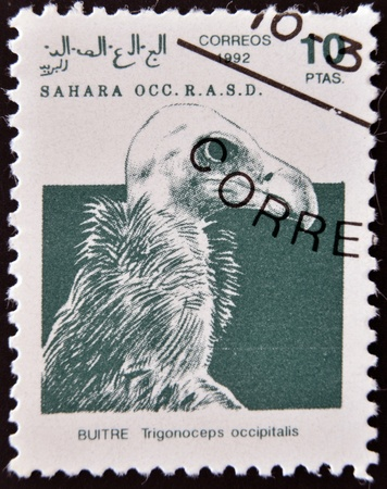 postman of the desert: SAHARA - CIRCA 1992: A stamp printed in Sahrawi Arab Democratic Republic (SADR), shows a White-headed Vulture (Trigonoceps occipitalis), circa 1992  Editorial