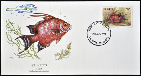 SAINT KITTS AND NEVIS - CIRCA 1991: A stamp printed in St Kitts shows a hogfish, lachnolaimus maximus, circa 1991 Stock Photo - 12465229