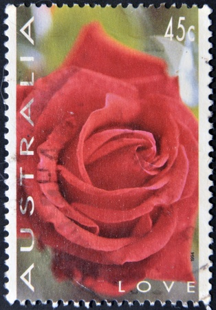 AUSTRALIA - CIRCA 1994: A stamp printed in austrlia shows a rose, love, circa 1994