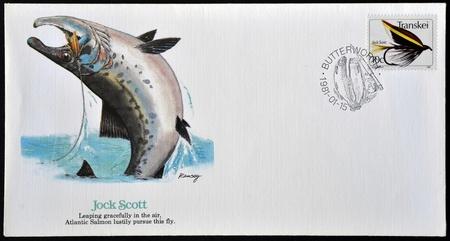 salmon leaping: REPUBLIC OF SOUTH AFRICA - CIRCA 1981: A postcard printed in Transkei shows Jock Scott, circa 1981