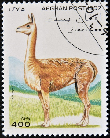 AFGHANISTAN - CIRCA 1997  A stamp printed in Afghanistan shows a lama vicugna, circa 1997 photo