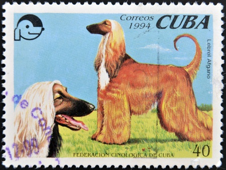 hounds: CUBA - CIRCA 1994  A stamp printed in Cuba shows two Afghan hounds, circa 1994  Stock Photo