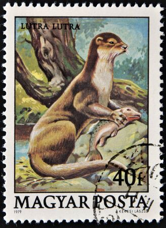 otter: HUNGARY - CIRCA 1979  A stamp printed in Hungary shows European Otter  Lutra lutra , circa 1979