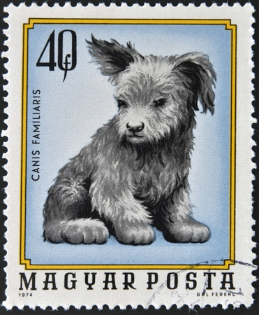 familiaris: HUNGARY - CIRCA 1974  A stamp printed in Hungary shows Canis Familiaris, circa 1974