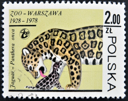 POLAND - CIRCA 1978  A stamp printed in Poland shows a Panthera onca, circa 1978  photo