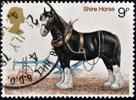 UNITED KINGDOM - CIRCA 1978  A stamp printed in Great Britain shows image of shire horse, circa 1978  Stock Photo - 12965718