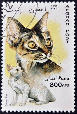 AFGHANISTAN - CIRCA 1996: A stamp printed in Afghan shows Devon Rex, circa 1996 Stock Photo - 13292265