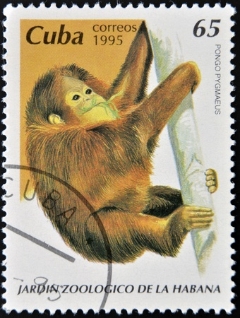 CUBA - CIRCA 1995: A stamp printed in Cuba shows pongo pygmaeus, circa 1995 Stock Photo - 13292097
