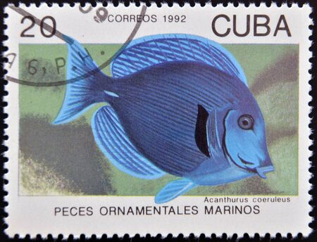 ornamental fish: CUBA - CIRCA 1992: Un timbro stampato a Cuba dedicato a pesci ornamentali, mostra Acanthurus coeruleus, circa 1992 Archivio Fotografico