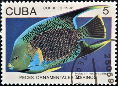 ornamental fish: CUBA - CIRCA 1992: Un timbro stampato a Cuba dedicato a pesci ornamentali, mostra Holacanthus Isabelita, circa 1992