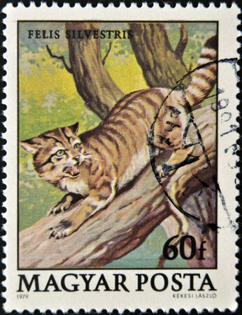 philatelic: HUNGARY - CIRCA 1979: A stamp printed in Hungary shows Wild cat, Felis silvestris, circa 1979