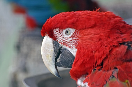 Parrot head Stock Photo - 13291913