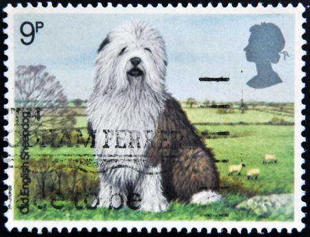 GREAT BRITAIN - CIRCA 1978: A stamp printed in the Great Britain shows Old English Sheepdog, circa 1978  photo