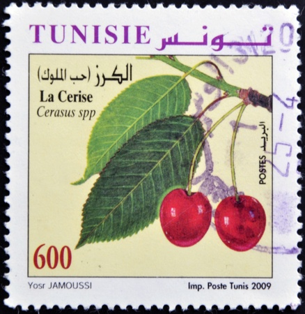 TUNISIA - CIRCA 2009: A stamp printed in Tunisia shows cherries, circa 2009 photo