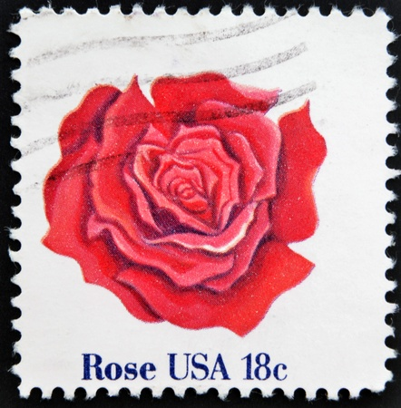UNITED STATES OF AMERICA - CIRCA 1981: A stamp printed in USA shows a rose, circa 1981 photo