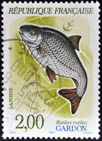 rutilus: FRANCE - CIRCA 1990: A stamp printed in France shows a rutilus rutilus, circa 1990