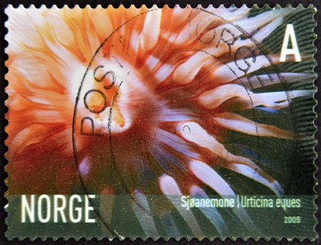 NORWAY - CIRCA 2005: A stamp printed in Norway shows Urticina eques, circa 2005 photo