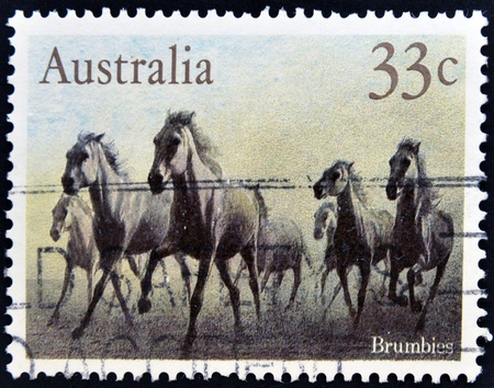AUSTRALIA - CIRCA 1986: A stamp printed in australia shows Brumbies, circa 1986 Stock Photo - 13874808