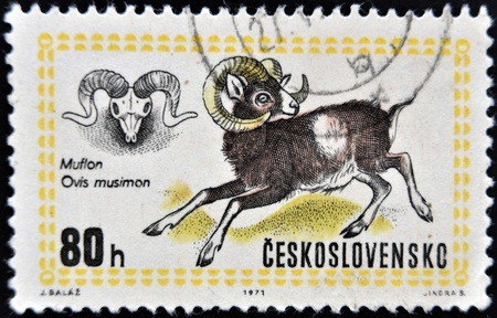CZECH REPUBLIC - CIRCA 1971: A stamp printed in Czechoslovakia and shows moufflon, Circa 1971.