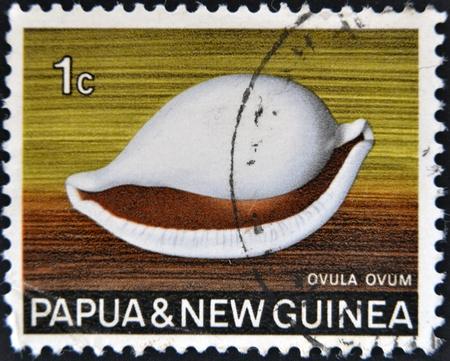 molluscs: PAPUA NEW GUINEA - CIRCA 1969:  A stamp printed in Papua New Guinea shows shell ovula ovum, circa 1969  Editorial