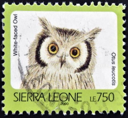 SIERRA LEONE - CIRCA 2000: A stamp printed in sierra Leone shows White-faced owl, otus leucotis, circa 2000 Stock Photo - 14137095
