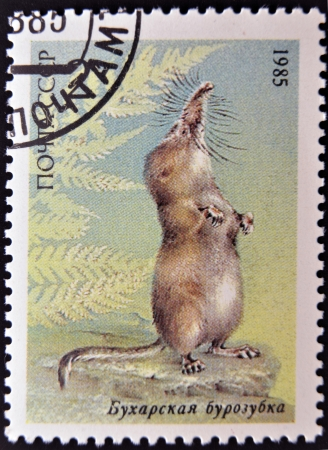 republics: UNION OF SOVIET SOCIALIST REPUBLICS - CIRCA 1985: a stamp printed in USSR shows a Pamir shrew (Sorex bucharensis), from the endangered wildlife series, circa 1985  Editorial