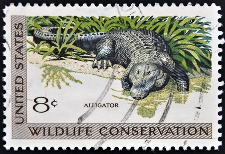 wildlife conservation: UNITED STATES OF AMERICA - CIRCA 1971  A stamp printed in USA dedicated to wildlife conservation, shows alligator, circa 1971 Editorial