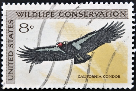 UNITED STATES OF AMERICA - CIRCA 1971  A stamp printed in USA dedicated to wildlife conservation, shows california condor, circa 1971