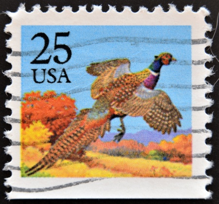 UNITED STATES OF AMERICA - CIRCA 1987: A stamp printed in USA shows Pheasant, Bird, circa 1987  Stock Photo - 14137128