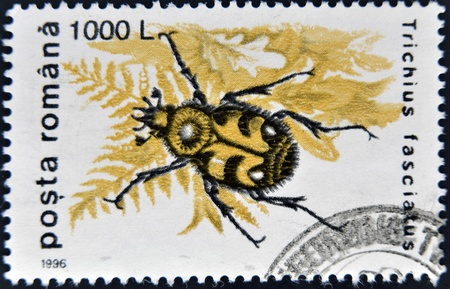 ROMANIA - CIRCA 1996: A stamp printed in Romania, show Trichius fasciatus, circa 1996.  photo