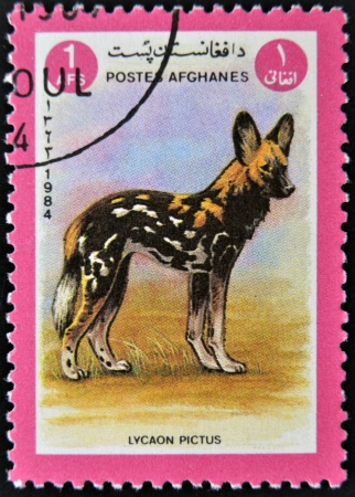 lycaon pictus: AFGANISTAN - CIRCA 1984  A stamp printed in AFGANISTAN shows image of a wild dog  Lycaon pictus , circa 1984