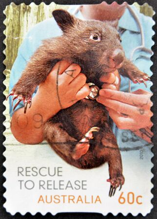 rescued: AUSTRALIA - CIRCA 2010: A stamp printed in Australia shows Tasmanian devil rescued, circa 2010